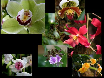 Download Love of Orchids wallpaper